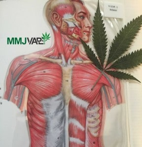 mmj-resource